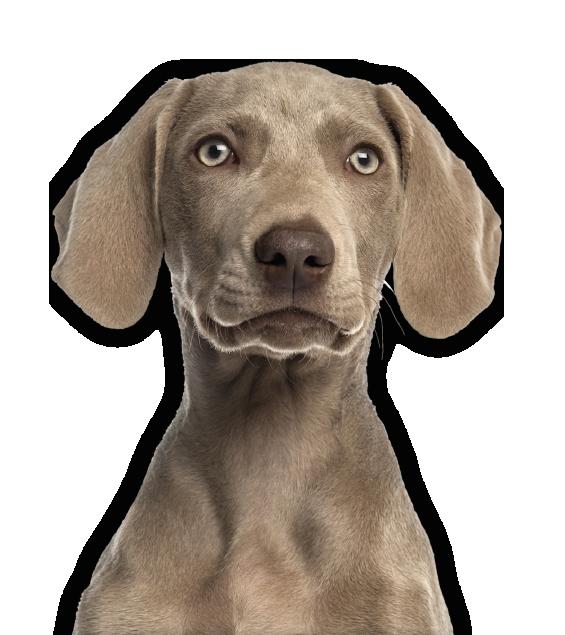 hond-kop2